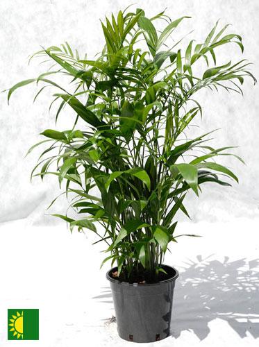 Bamboo500.jpg